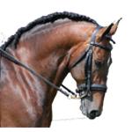 tori peter horses